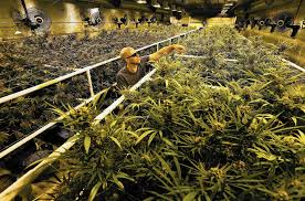 this california desert town is experiencing a marijuana boom la