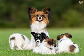 top 10 cheapest dog breeds top ten lists of everything