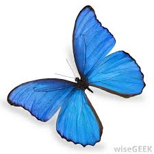 what is a butterfly farm with pictures