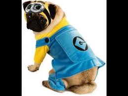 Pug Halloween Costume Despicable Minion Pet Pug Halloween Costume