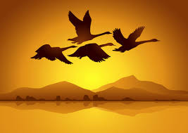 flying swan with sunset background vector free vector in adobe