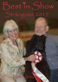 affenpinscher klubb norge södermanland kennelklubbs internationella hundutställning 2017