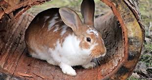 rabbit bunny bunny vs rabbit vs hare what s the difference
