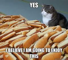 Hot Dog Meme - hot dog cat memes quickmeme