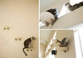 announcing the cats climbing high challenge from contempocat and