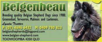 belgian shepherd rescue qld the pet directory australia dogs world u0027s largest online pet