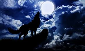 belgian shepherd howling why do dogs howl at the moon dogtime
