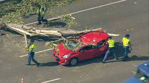 lexus service fife watch dash cam video captures tree fall on car on interstate 5 kcby