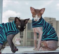 sphynx sweaters hairless sphynx cat clothes cat food coupons