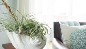 Indoor Plant Arrangements Homegoods Potted Plants