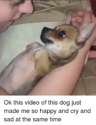 Happy Crying Meme - ok this video of this dog just made me so happy and cry and sad at