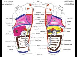 Foot Reflexology Map Foot Reflexology Map For Beginners 18 Youtube