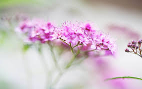 remarkable flowers stunning wallpaper big size mt wallpapers