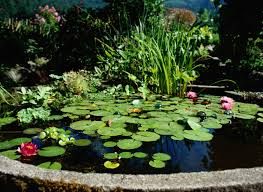 Patio Pond by