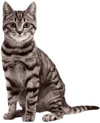 popular cat names also into cats