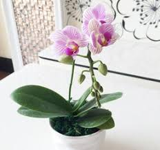 discount common ornamental plants 2018 common ornamental plants