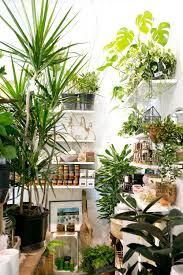the zen succulent durham u0027s neighborhood plant u0026 gift shopthe zen