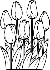 seven tulips coloring page wecoloringpage