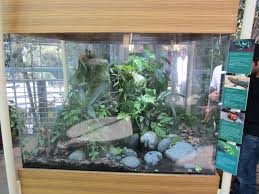 terrariums and housing archives amphibian care
