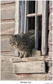 209 best cats love windows images on pinterest windows animals window cat by hunter1828