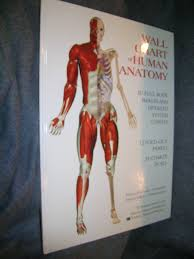 Full Body Muscle Anatomy Wallchart Of Human Anatomy 3 D Full Body Images Detailed System