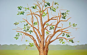 custom handpainted murals painted trees tree murals children