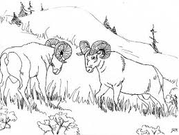 grassland coloring pages 100 images 9 pics of savanna animals