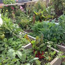 summer vegetable gardening learn how do you keep your vegetables
