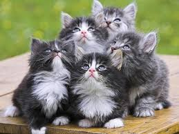5 incredibly cute kittens cute kittens pinterest kitty and cat