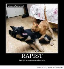 Hilarious Memes 2013 - funny animal picures with quotes quotes funny images funny