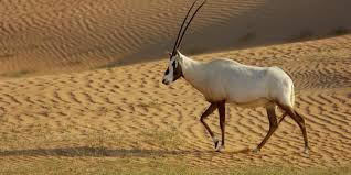 bbc earth meet ten animals that look like real life unicorns