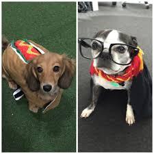 spirit halloween glassdoor baby raisin as a dog and daxko office photo glassdoor