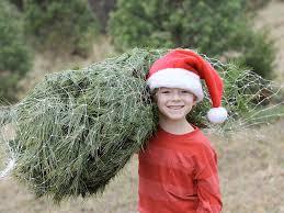 where christmas trees grow kentucky living