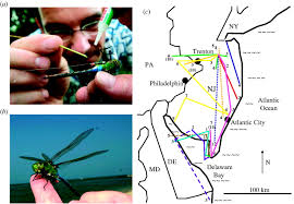 Hummingbird Migration Map Simple Rules Guide Dragonfly Migration Biology Letters