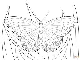 white admiral butterfly coloring page free printable coloring pages