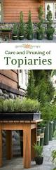 Topiary Frames Online Best 25 Topiary Plants Ideas On Pinterest Hanging Planters