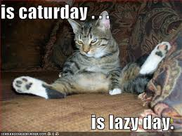 Lazy Day Meme - image 181607 caturday know your meme