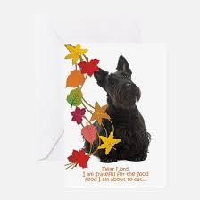 scottish terrier thanksgiving greeting cards cafepress