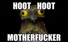 Potoo Bird Meme - weird stuff i do potoo potoo bird meme and image macro