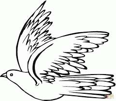 pigeon 19 download coloring page animal art of pigeons
