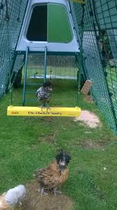 the chicken swing australian number 1 chicken toy