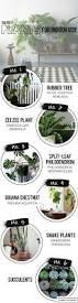 Best Indoor House Plants Fyi Indoor House Plants U2013 Amber Interiors
