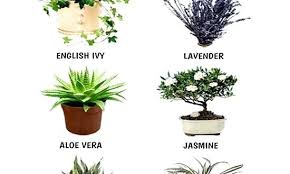 best plants for bedroom best indoor bedroom plants betweenthepages club