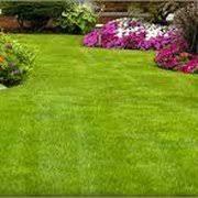 Lawn And Landscape by Swingle Lawn Tree U0026 Landscape Care 23 Photos U0026 101 Reviews