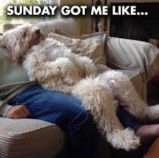 Its Sunday Meme - sunday memes funny sunday night memes and pics