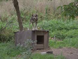 Igloo Dog House Top 3 Dog House For Rottweiler Reviews Dog N Treats
