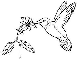 bird coloring pages images crazy gallery 286393 coloring pages