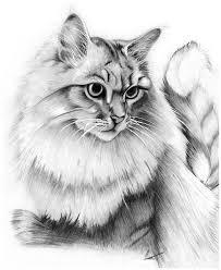 imagenes a lapiz de gatos imagenes para dibujar gatos a lapiz dibujos de gatos