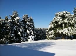 winter trees backyard snow outdoors fields desktop pictures free