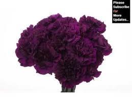 purple carnations purple carnation flower bouquet picture set